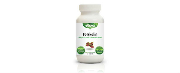 Alova Forskolin Review